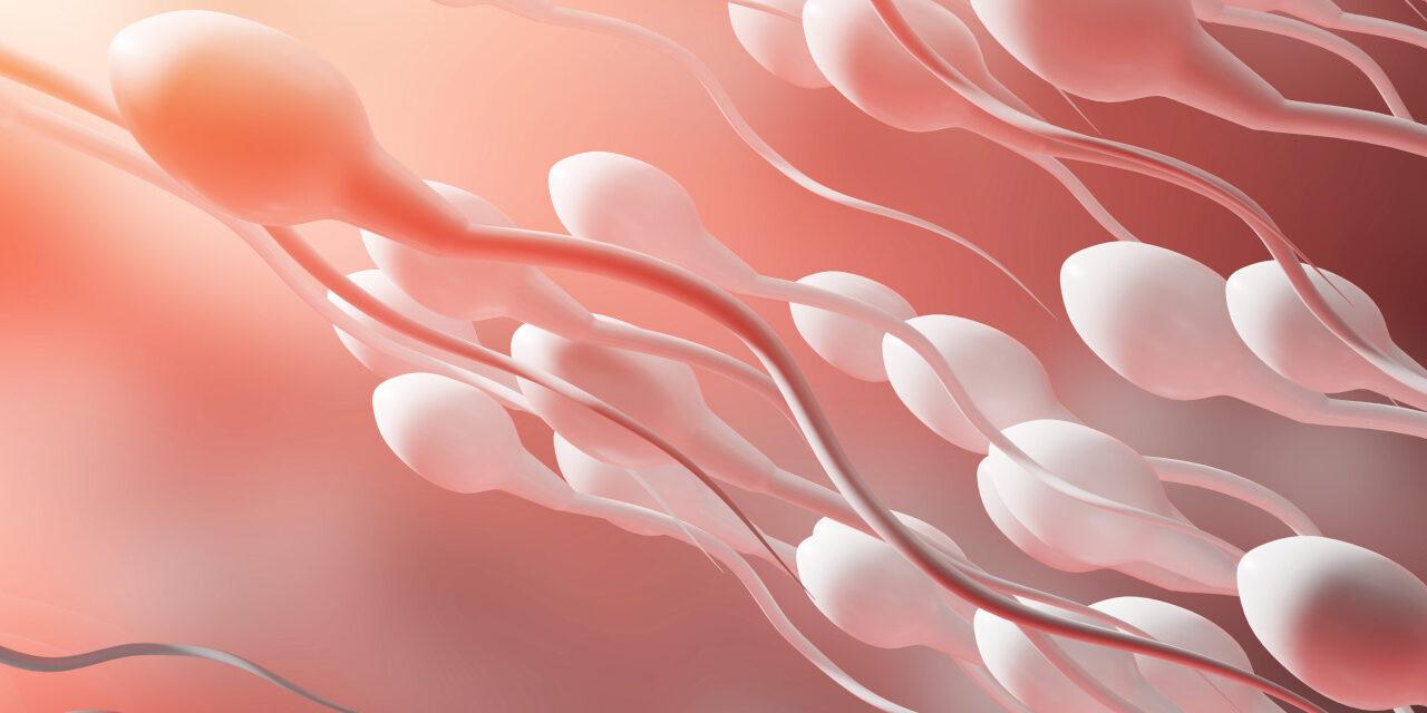 Plemniki w dobrej kondycji, czyli co wpływa na męską płodność