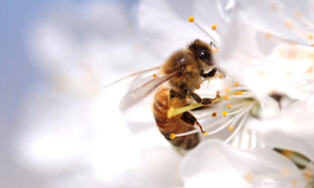 Uczulenie na jad owadów – co warto o nim wiedzieć?